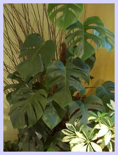 Alsace strasbourg fleurs de rome plantes vertes for Catalogue plantes vertes